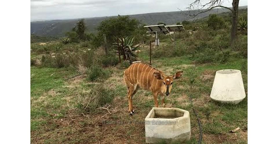 Big Girl – Nyala at Bushmans Game Ranch Alexandria