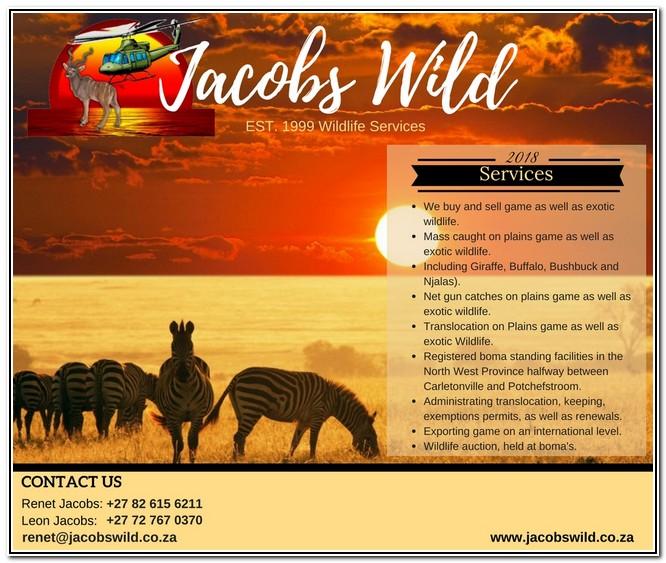 Jacobs Wild 1